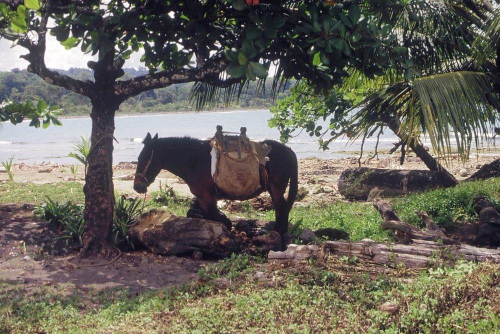 Mula esperando dueño frente pulpería Puerto Viejo