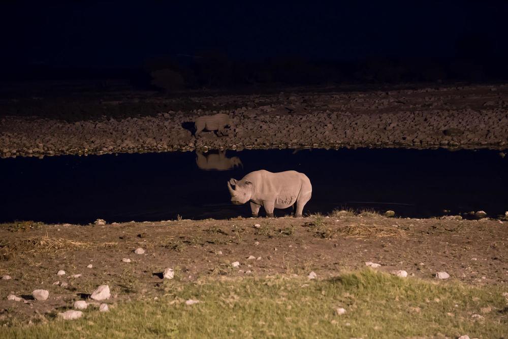 Big 5 - Rhino.jpg