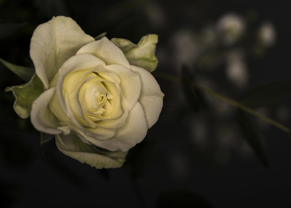 Florist5.jpg