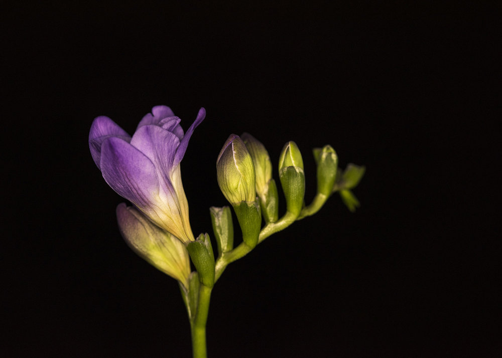 Florist20.jpg