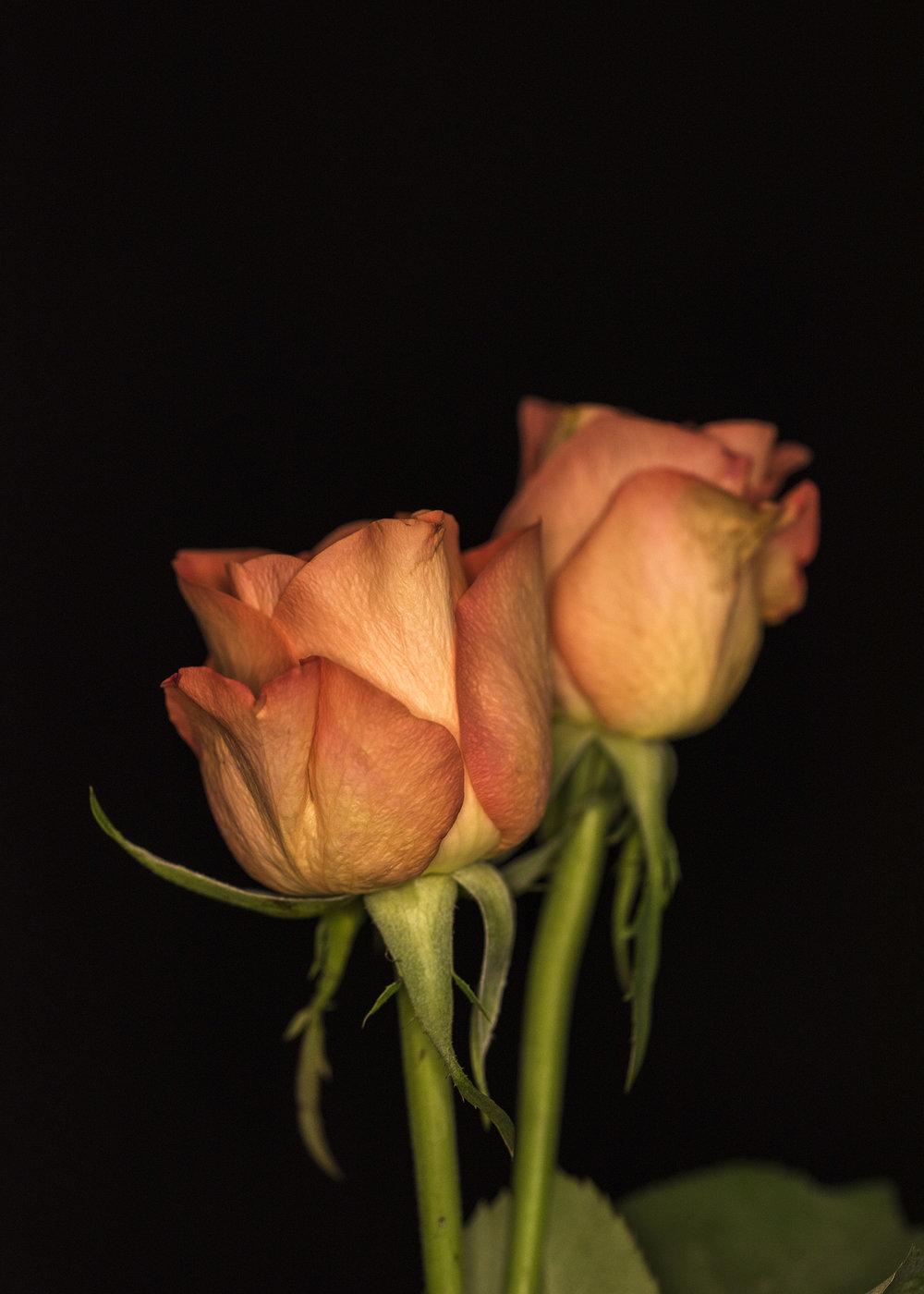 Florist24.jpg