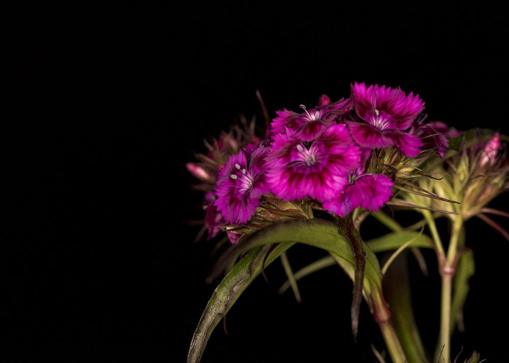Florist25.jpg