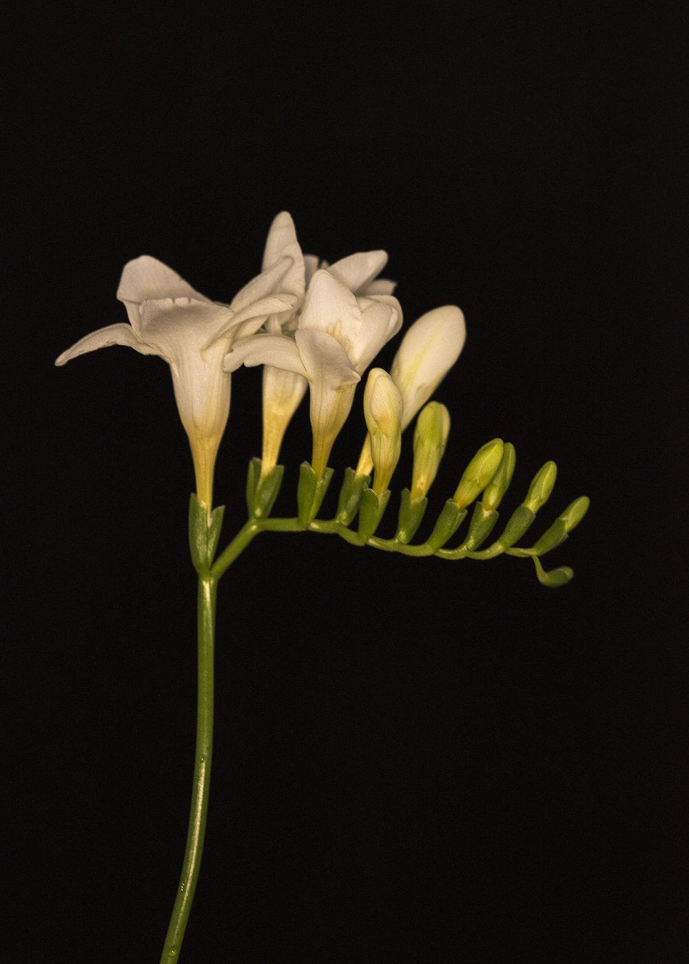 Florist28.jpg