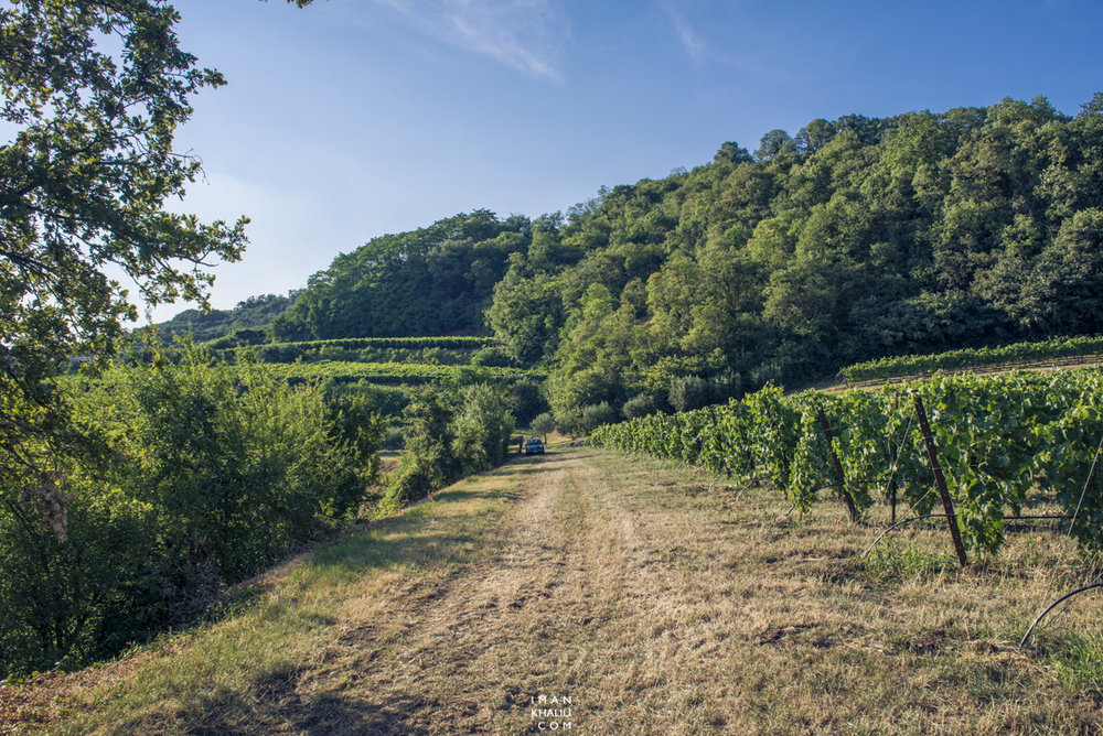 The vineyards of Tuscany and Montepulciano