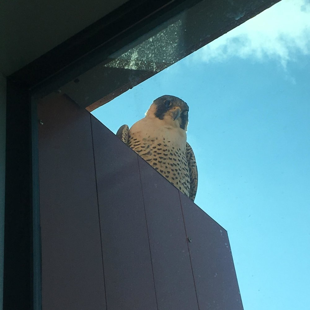 """""""I too have a feathered friend who hangs out by my window."""" By rafaelmanzeli via Reddit."""