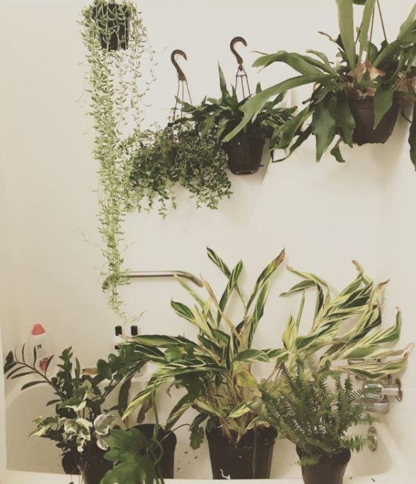 Ferns in a Bathtub via Golden Greenery