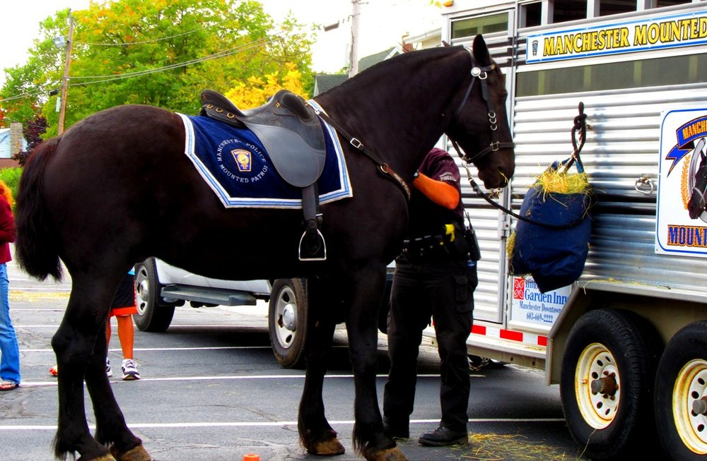 Everyone was wowed by the beauty and majesty of the Mounted Police Horse.