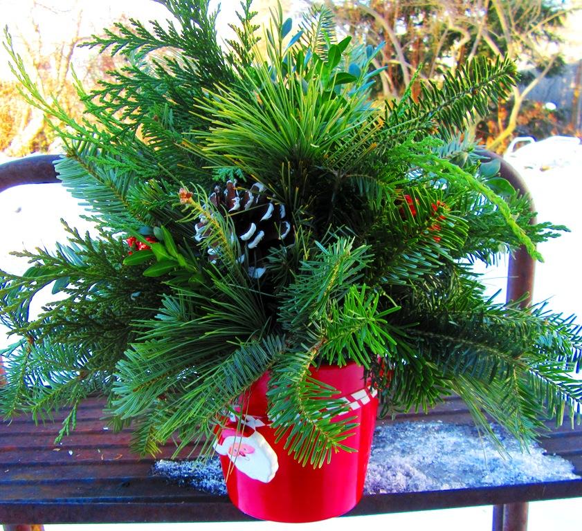 mixed evergreen arr. in ceramic Santa pot