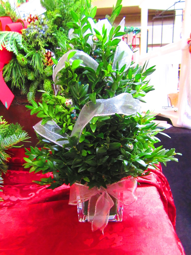 $15 boxwood arrangement in glass, simply decorated with silver ribbon and balls