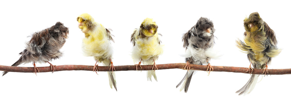 5 yellow and gray birds on a branch