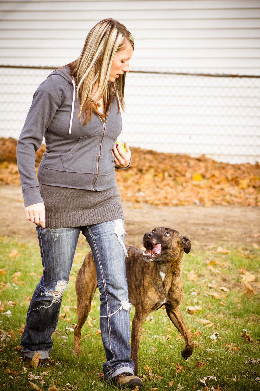 dog heeling obedience