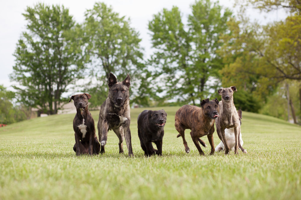 dog training group