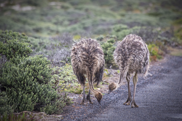 cape-point-animals-12.jpg