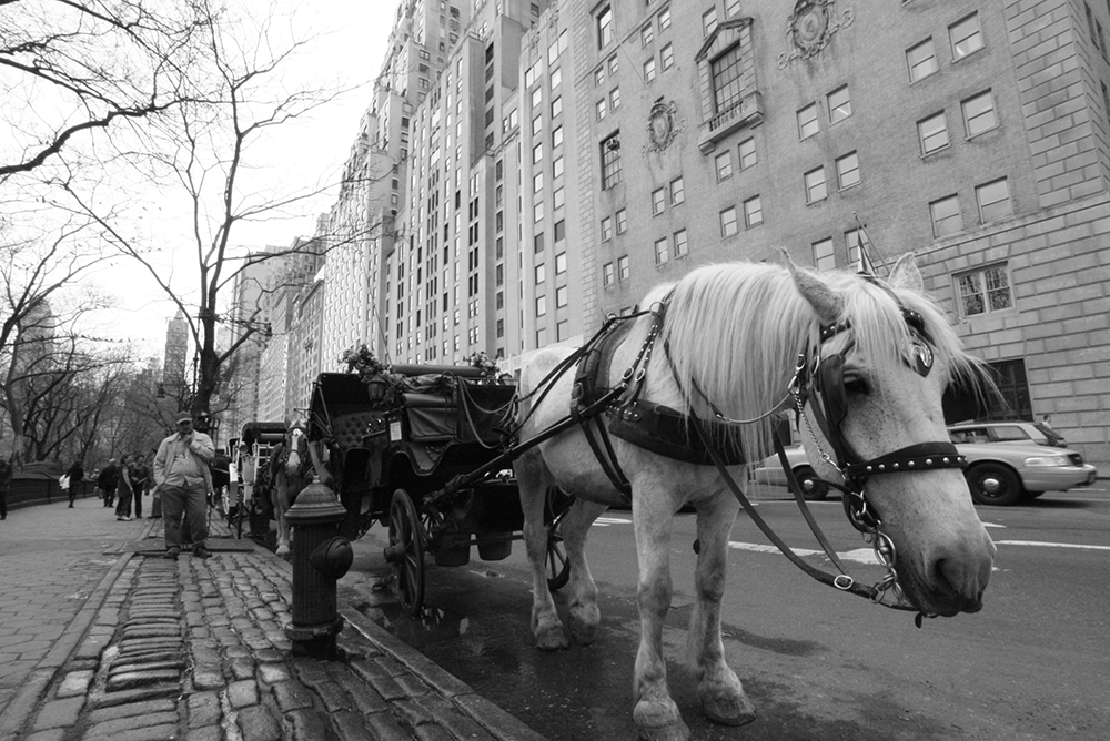 caballo cansao nyc2.jpg