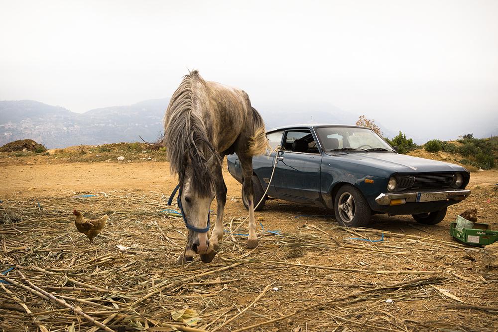 caballo amarrao a coche libano copy.jpg
