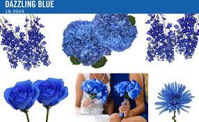 dazzling blue flowers