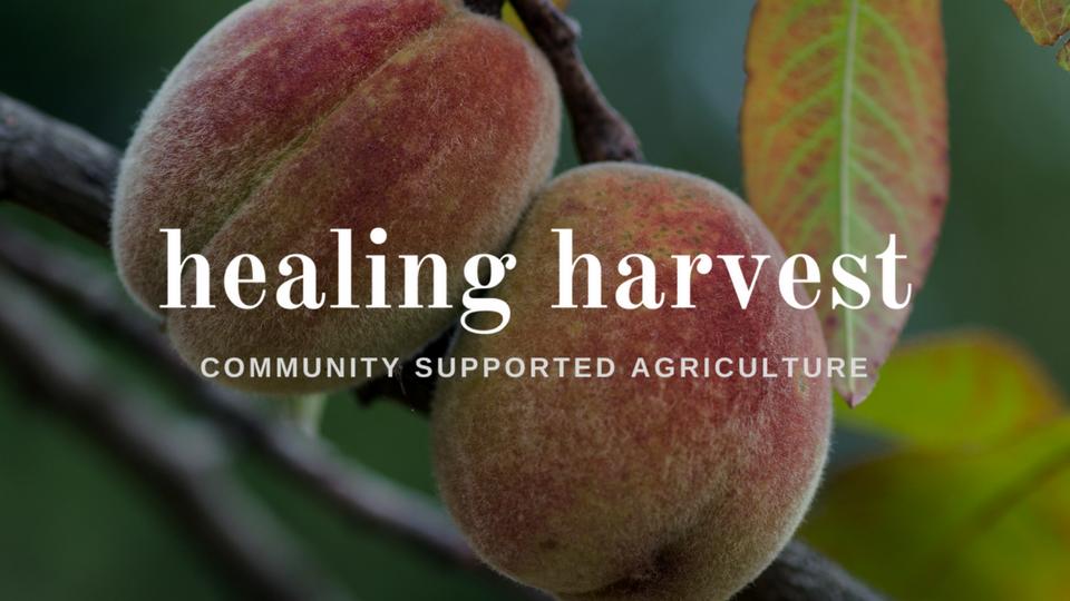 Michelle-Sander-Marketing-Clients-Healing-Harvest.png