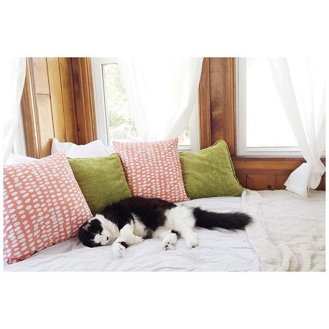 His favorite spot. // #catsofinstagram #studiocat #midwest #midwestblogger #thatsdarling #homedecor #lifestyleblogger #lifestyle #meow #naptime #decor