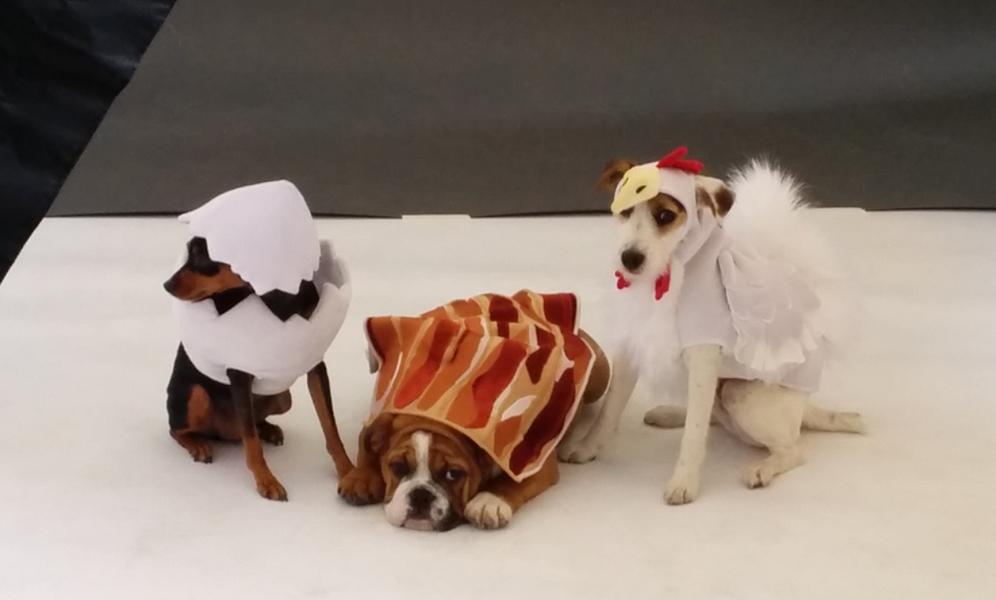 cesar dogs.jpg
