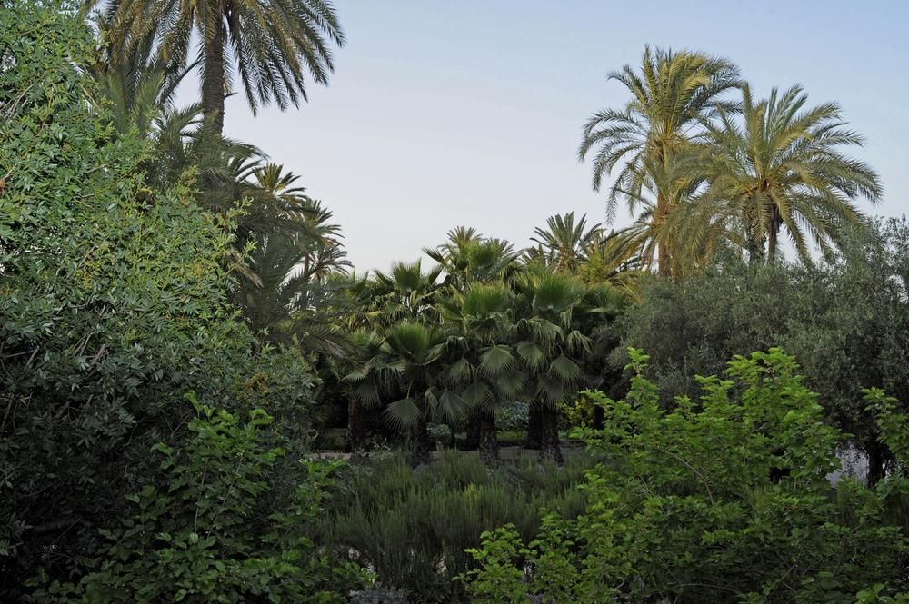 Garden jungle web.jpg