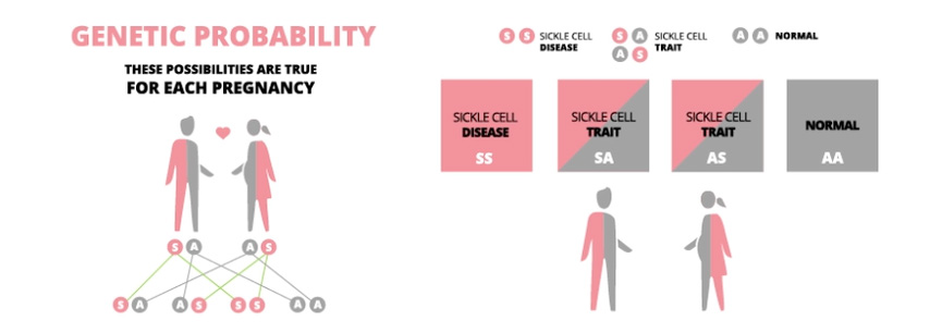 Genetic probability for two parents with Sickle Cell Trait