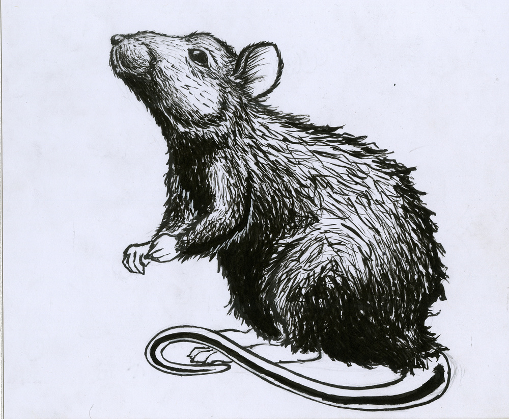 Rat Ink.jpg