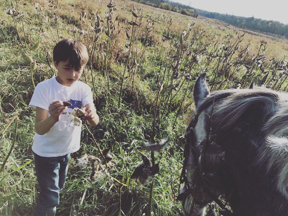 Horses, Hiking and Meditation -