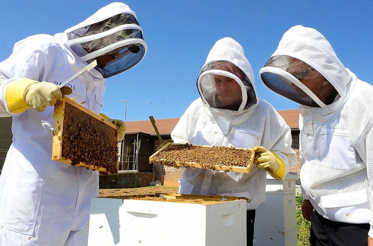 Interested in Starting Beekeeping?