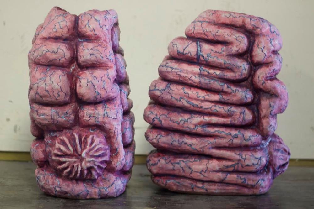 Brain Sac Feet