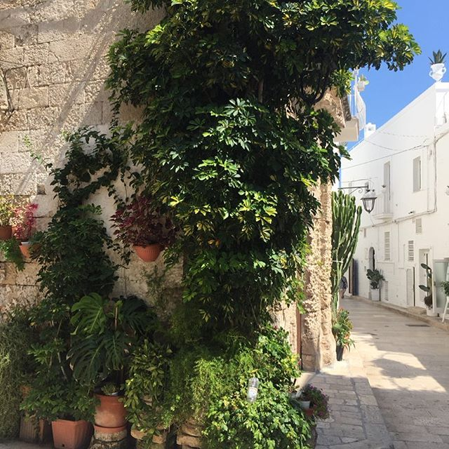 Never bored of italian landscapes #monopoli #puglia