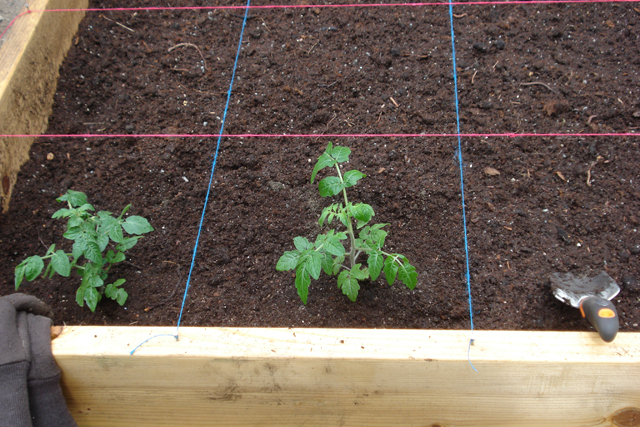 Planting.