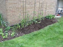 My Apartment Garden in 2009