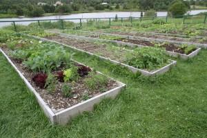 One of the inspiring stops on last year's Open Garden Day map: Memorial University Community Garden