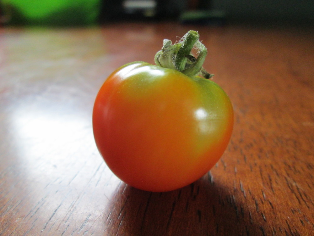 This is the first tomato of 2015 grown by Carlene Palliser—Our Food in Rigolet Coordinator and beginner gardener. Locally-grown food is in short supply in Rigolet, so a backyard garden skill-sharing program was organized in the spring of 2015 as part of the Food First NL CLFA. Six beginner gardeners were mentored by five community members with gardening experience. 77 of 98 households responded to the CLFA survey in the town, with 96 per cent of respondents reporting concerns with food.