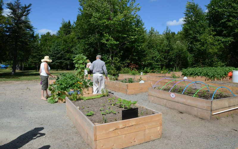 Best Practices Toolkits - Toolkits to assist community organizations start bulk buying clubs, community gardens, community kitchens, and farmers' markets.