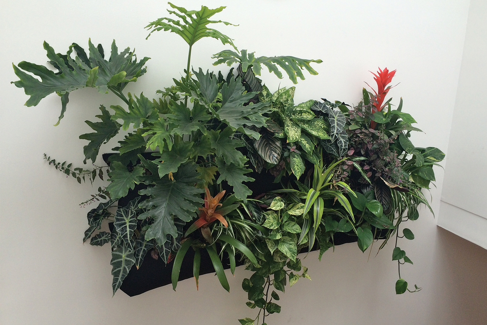 Air-scrubbing low-light tropicals vertical garden by Amanda Goldberg Planted Design.