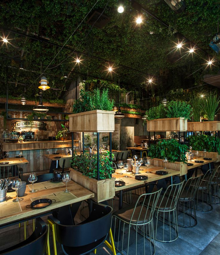 Plant ceiling and herbs at Segev Kitchen Garden Restaurant in Hod Hasharon, Israel