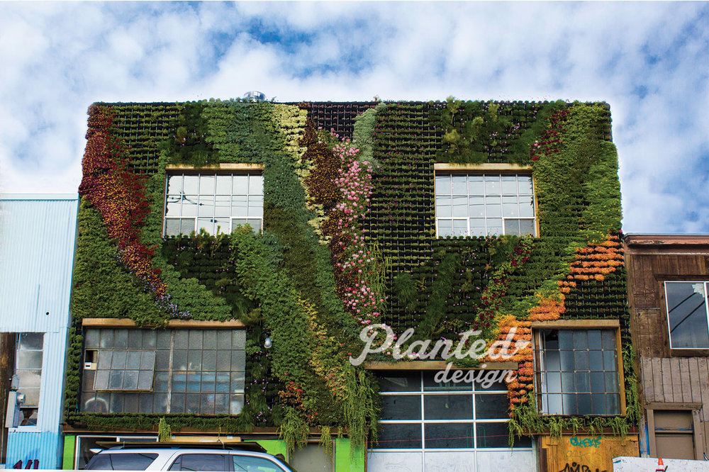 PlantedDesign-LivingWall-SF-BeSafehouse3.jpg