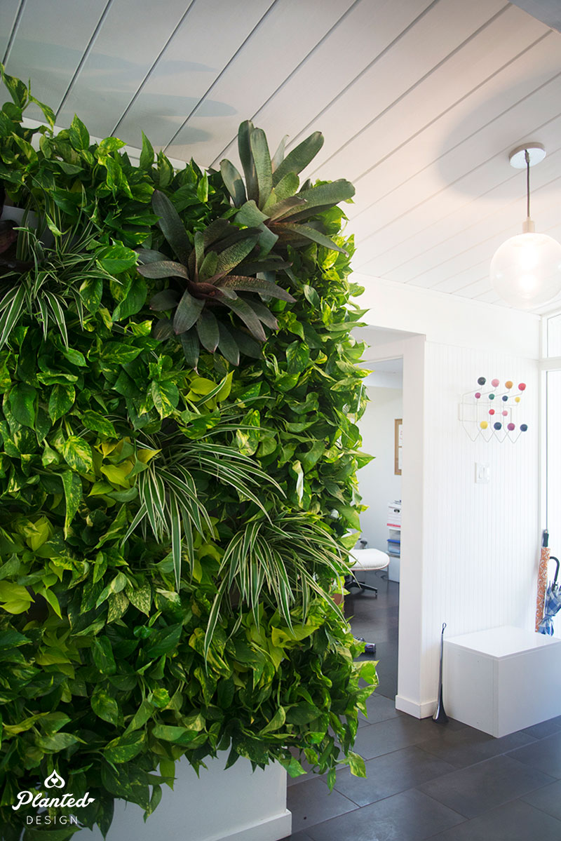 PlantedDesign-LivingWall-SF-ChrisMisner8.jpg