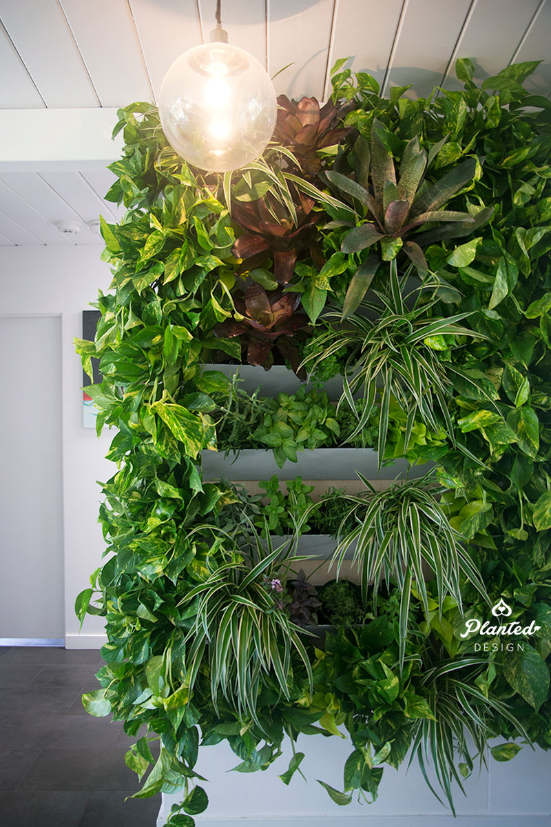 PlantedDesign-LivingWall-SF-ChrisMisner6.jpg