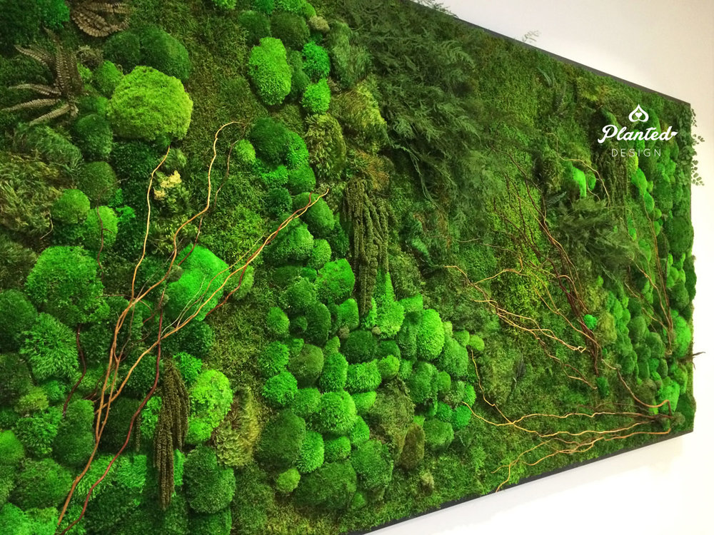 PlantedDesign-Moss-Wall-SF-InsideSource-12.jpg