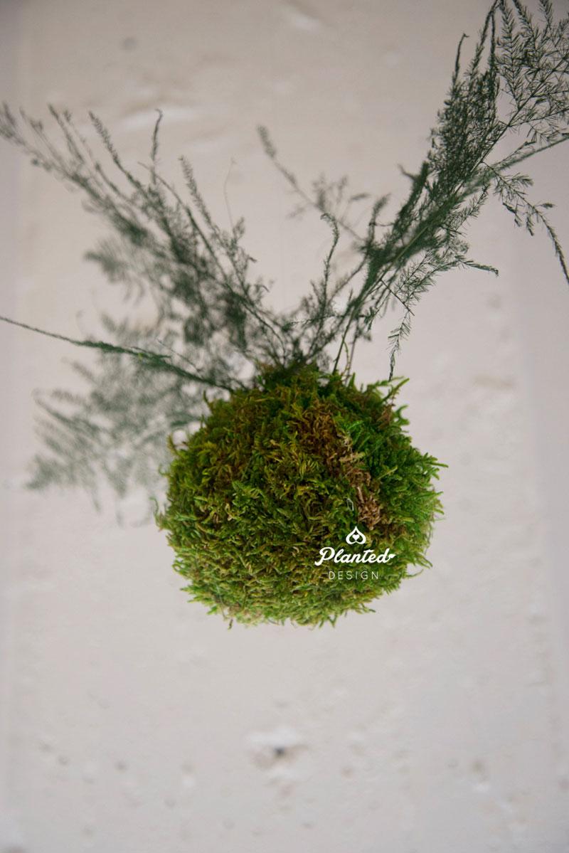 PlantedDesign-MossWall-SF-NRDC17.jpg