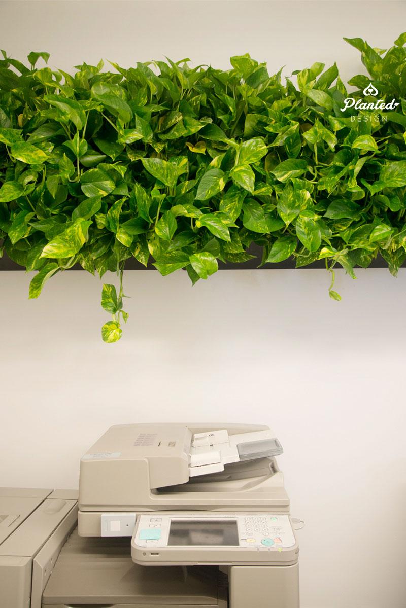 PlantedDesign-LivingWall-SF-NRDC8.jpg