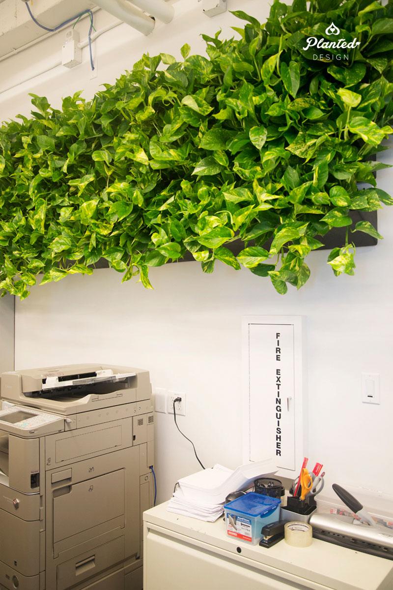 PlantedDesign-LivingWall-SF-NRDC10.jpg