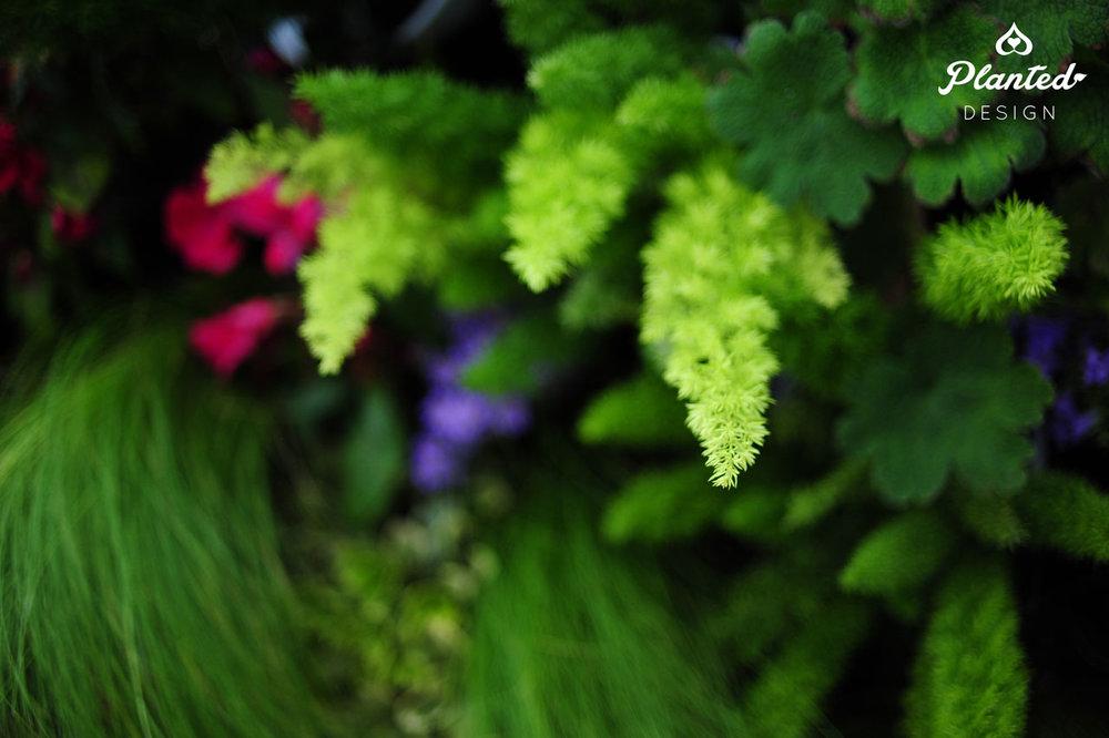 PlantedDesign-RentalLivingWall-SF-LivingSouthwest5.jpg