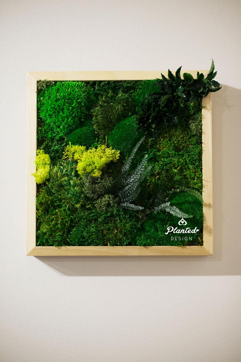 PlantedDesign-Moss-Wall-SF-Yuzu_Broffee3.jpg