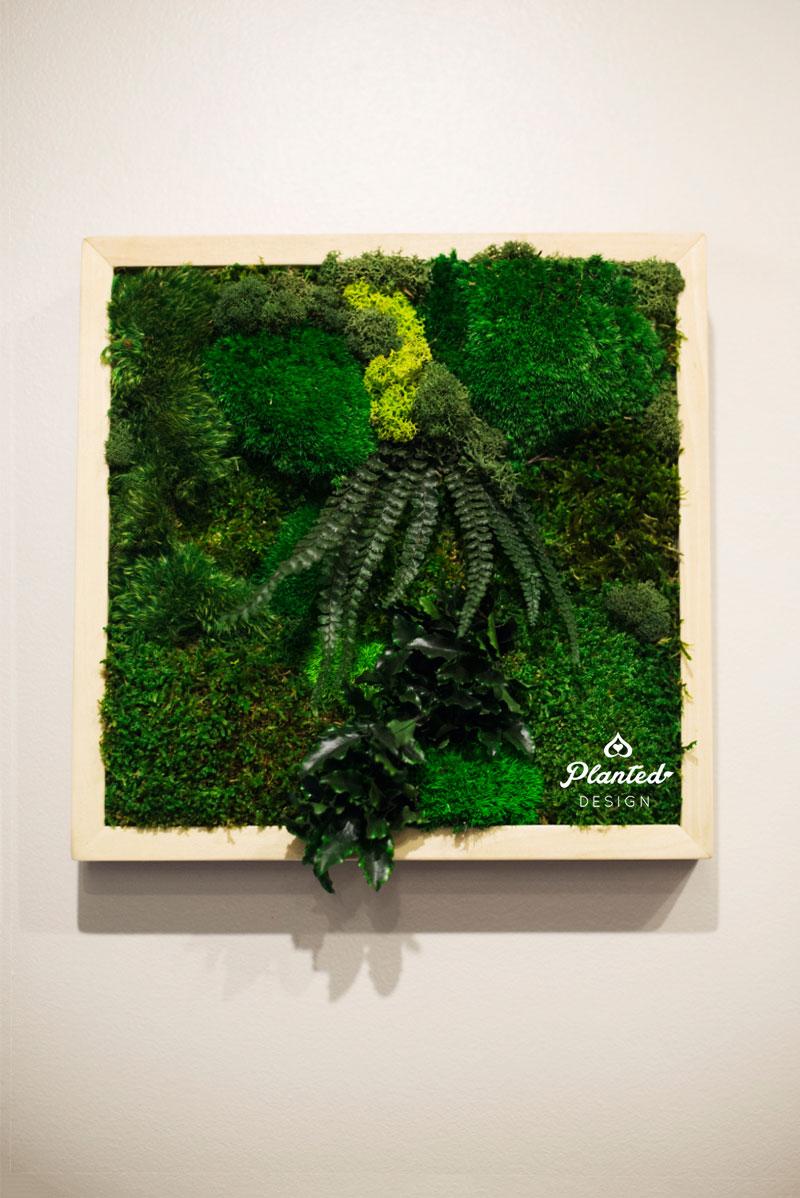 PlantedDesign-Moss-Wall-SF-Yuzu_Broffee4.jpg