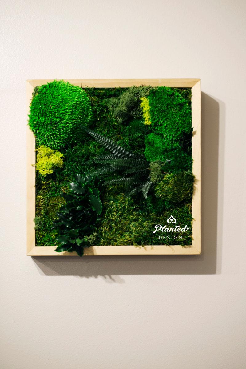 PlantedDesign-Moss-Wall-SF-Yuzu_Broffee6.jpg