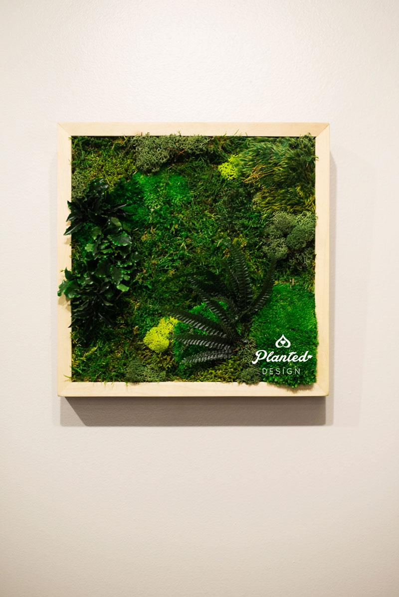 PlantedDesign-Moss-Wall-SF-Yuzu_Broffee5.jpg