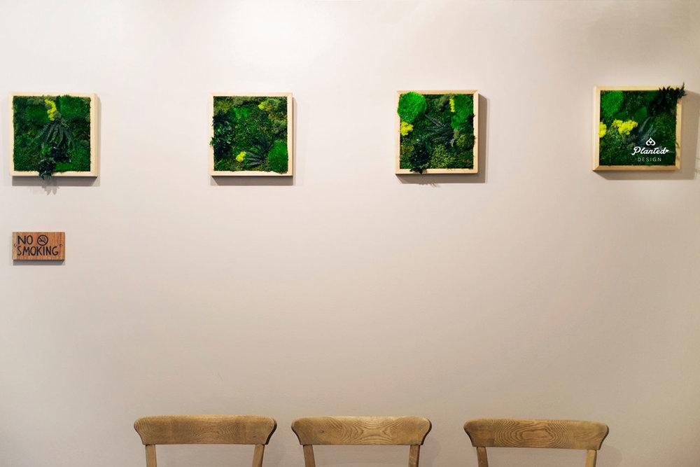 PlantedDesign-Moss-Wall-SF-Yuzu_Broffee7.jpg